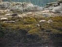 Sea lions and seals are abundant in Alaska.